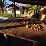 Villa Manodiana - zithoek-tuin