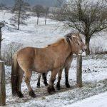 Vakantiehuis Villa Houmont - omgeving winter