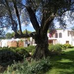 Villa Can Elisa - villa